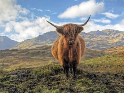 Wild Escocia: las Tierras Altas