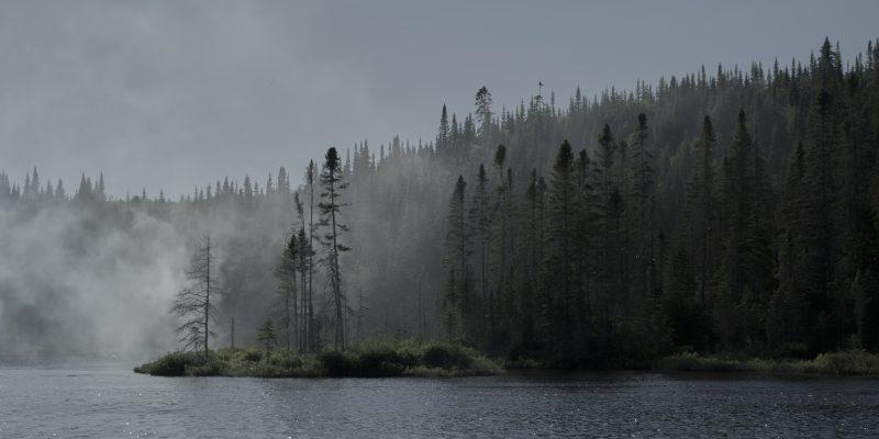 El bosque infinito